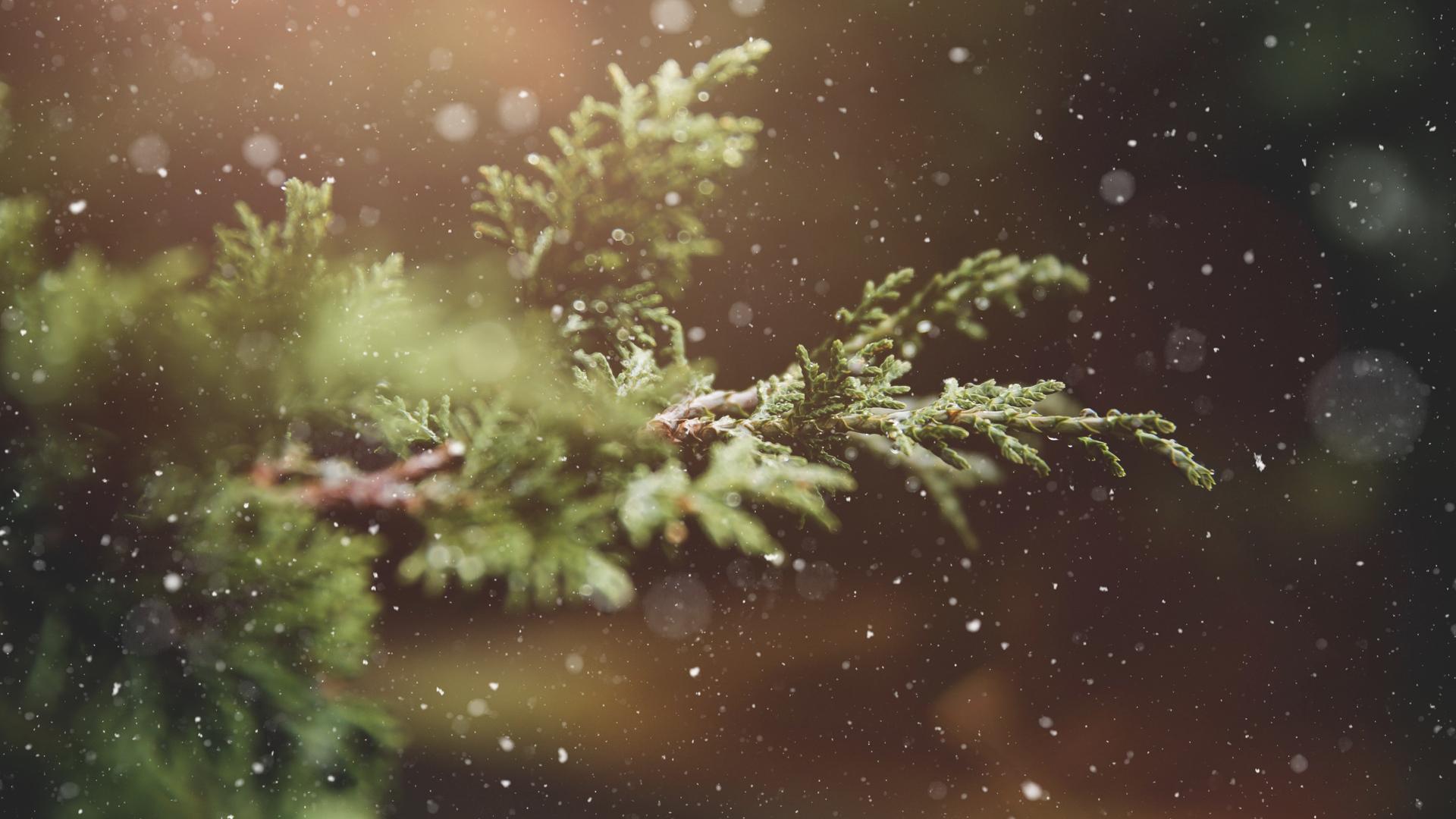 Christmas Announcemnets 2018.001.jpeg