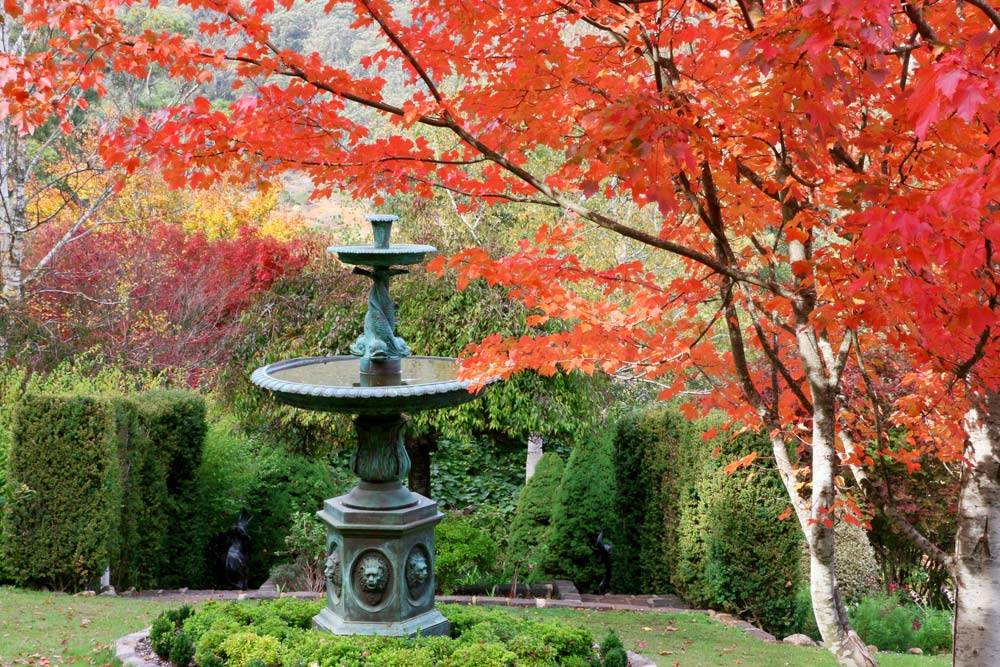 1674-maple-with-foreground-fountain2-1000-40.jpg