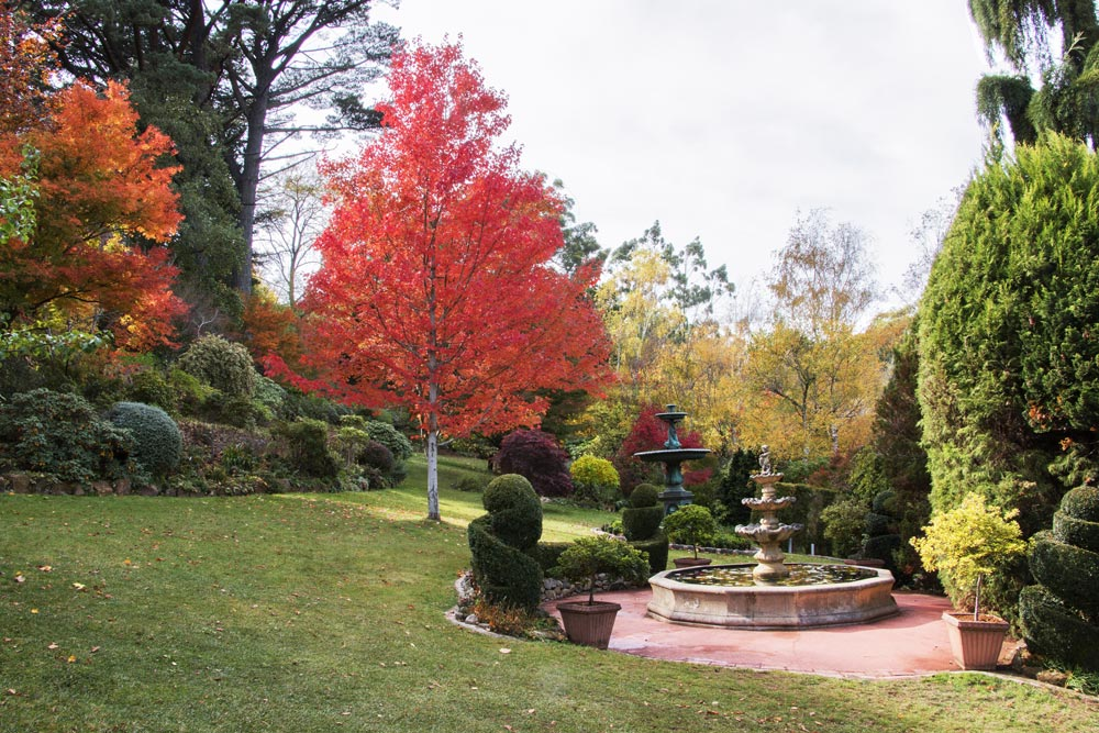 1683-maples-with-two-fountains-1000-50.jpg