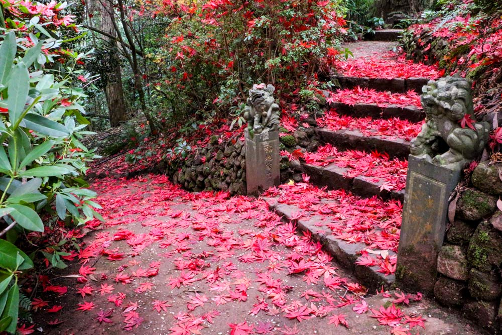 6992-autumn-leaves-on-steps-1000.jpg