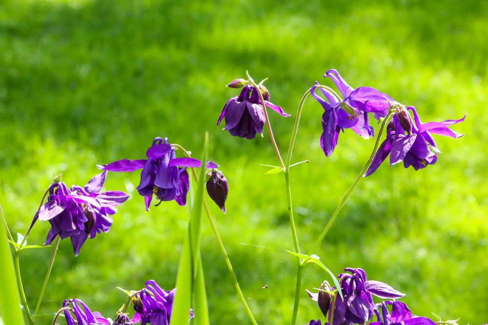 9312-purple-flowers-1000.jpg