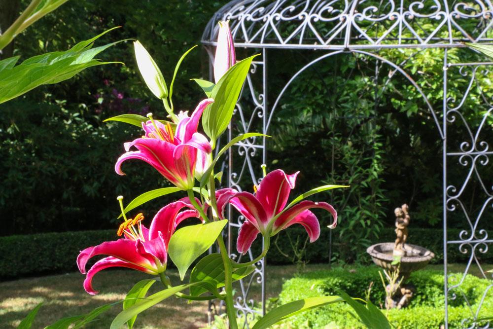 9703-lily-flower-and-pergola-1000.jpg