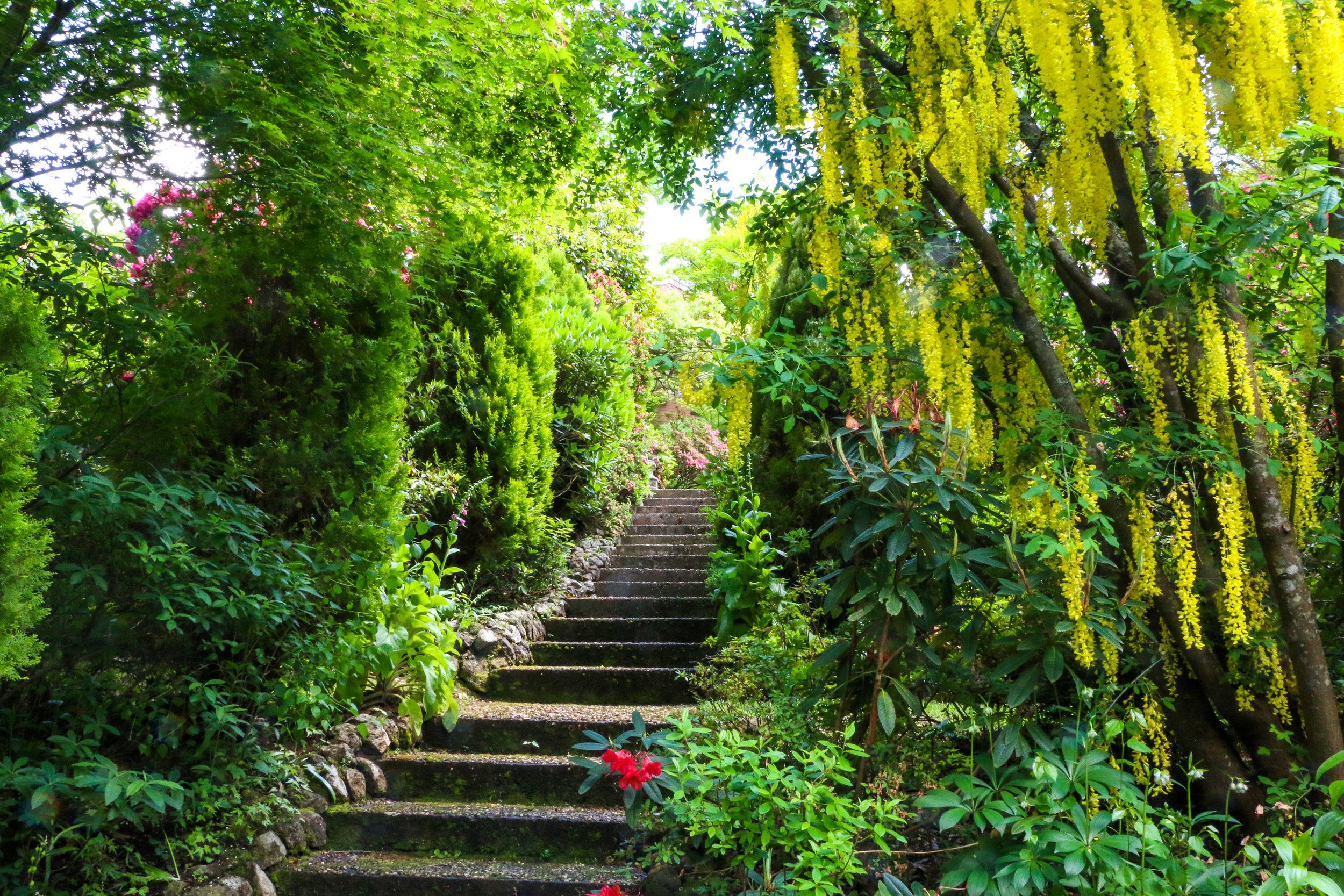 9430 laburnum and steps wf.jpg