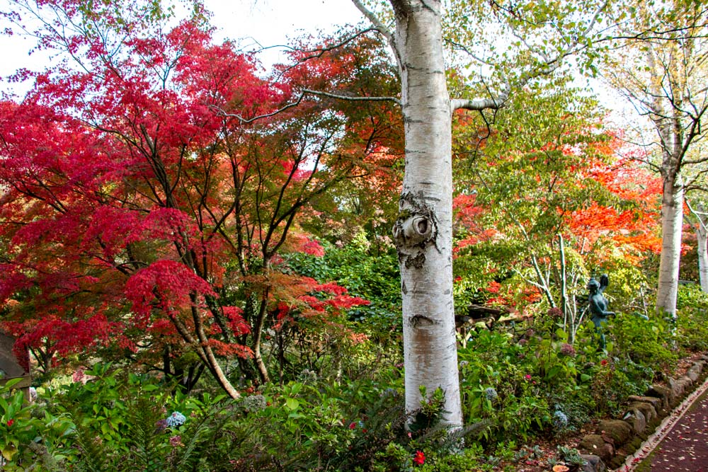 1270-maples-and-birches-closer-1000.jpg