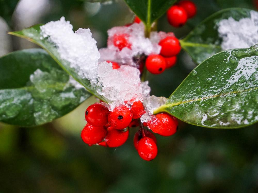 2222-berries-1000.jpg