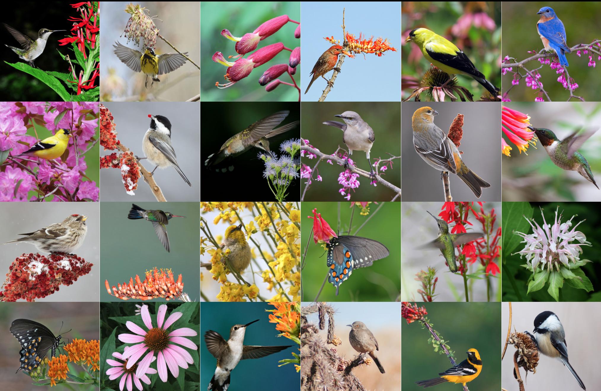 Photos: Top row, left to right: Tom Mayhew/Audubon Photography Awards (APA); Dennis Derby/APA; Will Stuart; Philip Sonier/APA; Victoria Ambrosey/APA; Glenda Simmons/Great Backyard Bird Count (GBBC). Row 2: Christopher Mann/APA; Missy Mandel/GBBC; Carmen Elia/APA; Glenda Simmons/GBBC; Rejean Turgeon/GBBC; David Shipper/APA. Row 3: Missy Mandel/GBBC; David Daniels/APA; Lisa Langell/APA; Will Stuart; Kristen Cart/APA; Will Stuart. Bottom row: Will Stuart (2); Richard Pick/APA; Brandon Percival/GBBC; Virginia Short/APA; Jeanette Tasey/APA