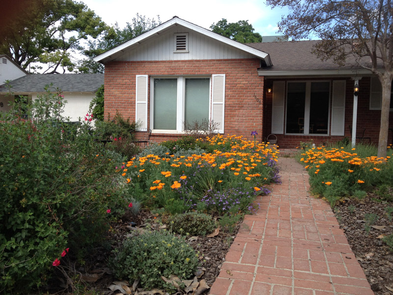 A Cottage style Garden with a mix of native and non-native species to ensure year-round interest. Visalia, CA.