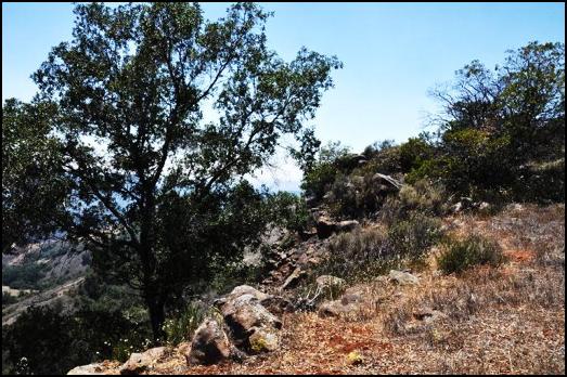 Edge of Miller Mountain