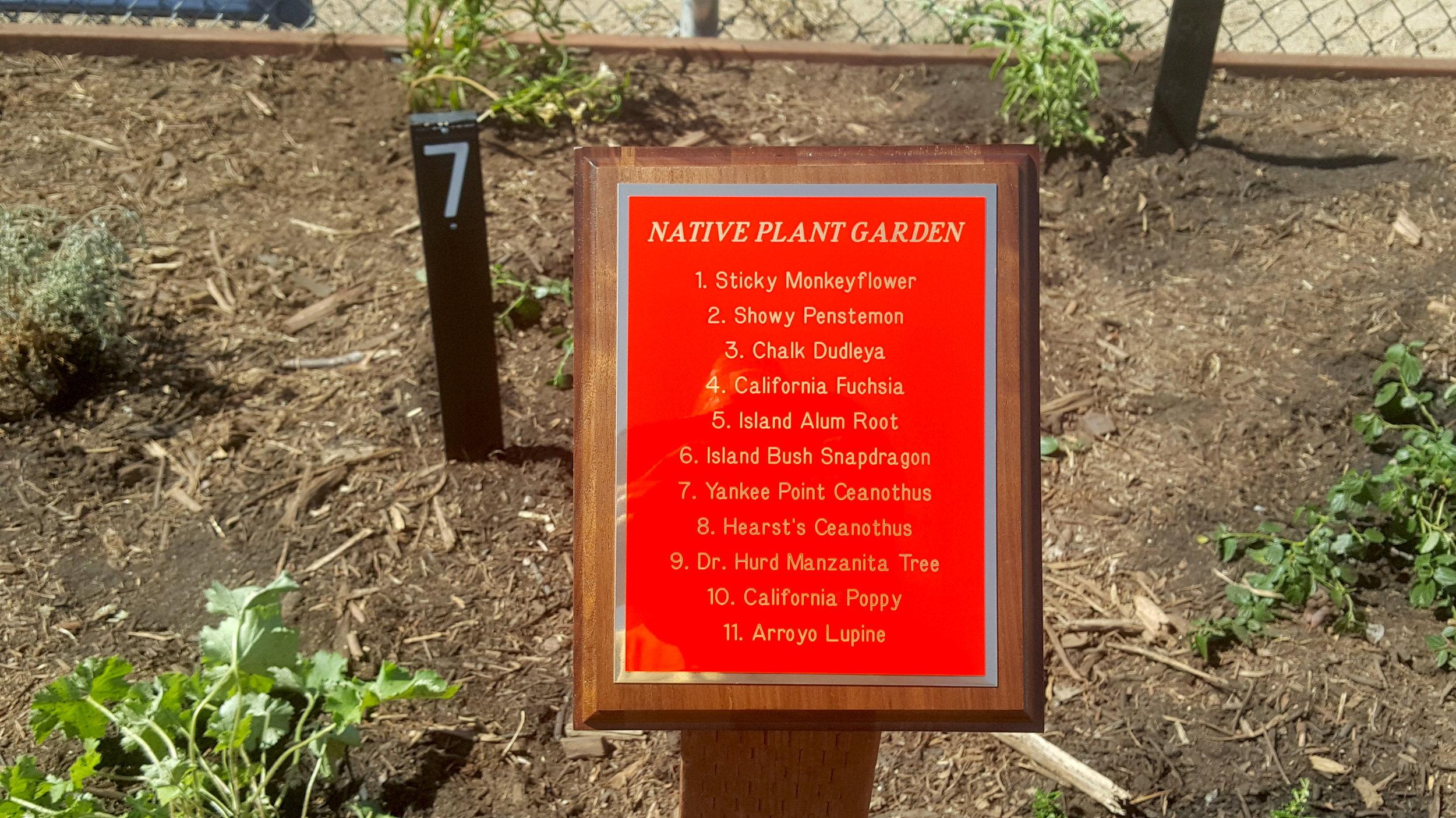 Garden at Cajon Park School in Santee conceptualized by Josh Long