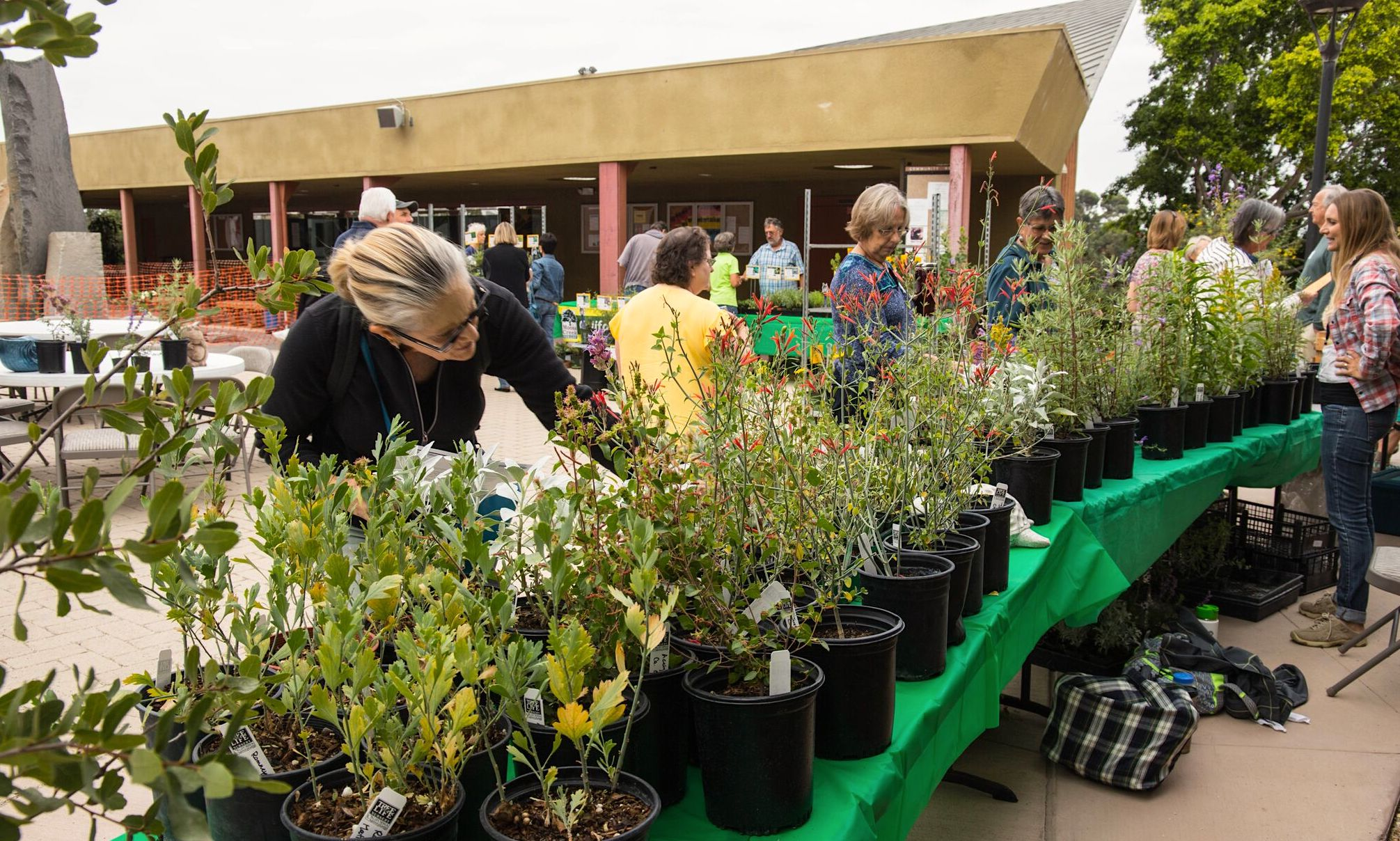 Tree of Life Nursery plants for sale