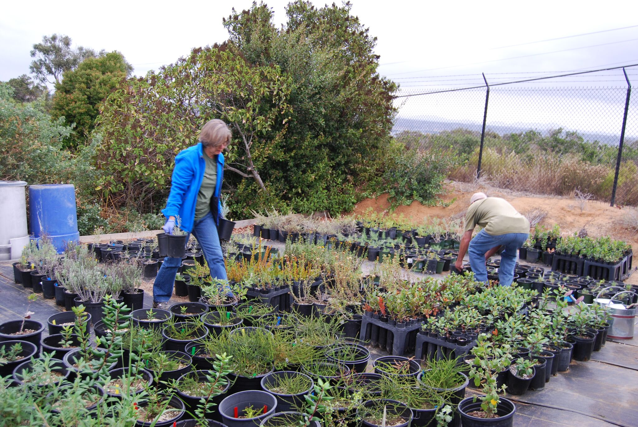 Volunteers collecting the plants that have been grown by staff and volunteers at the National Monument's propagation nursery on Navy property near CNM.