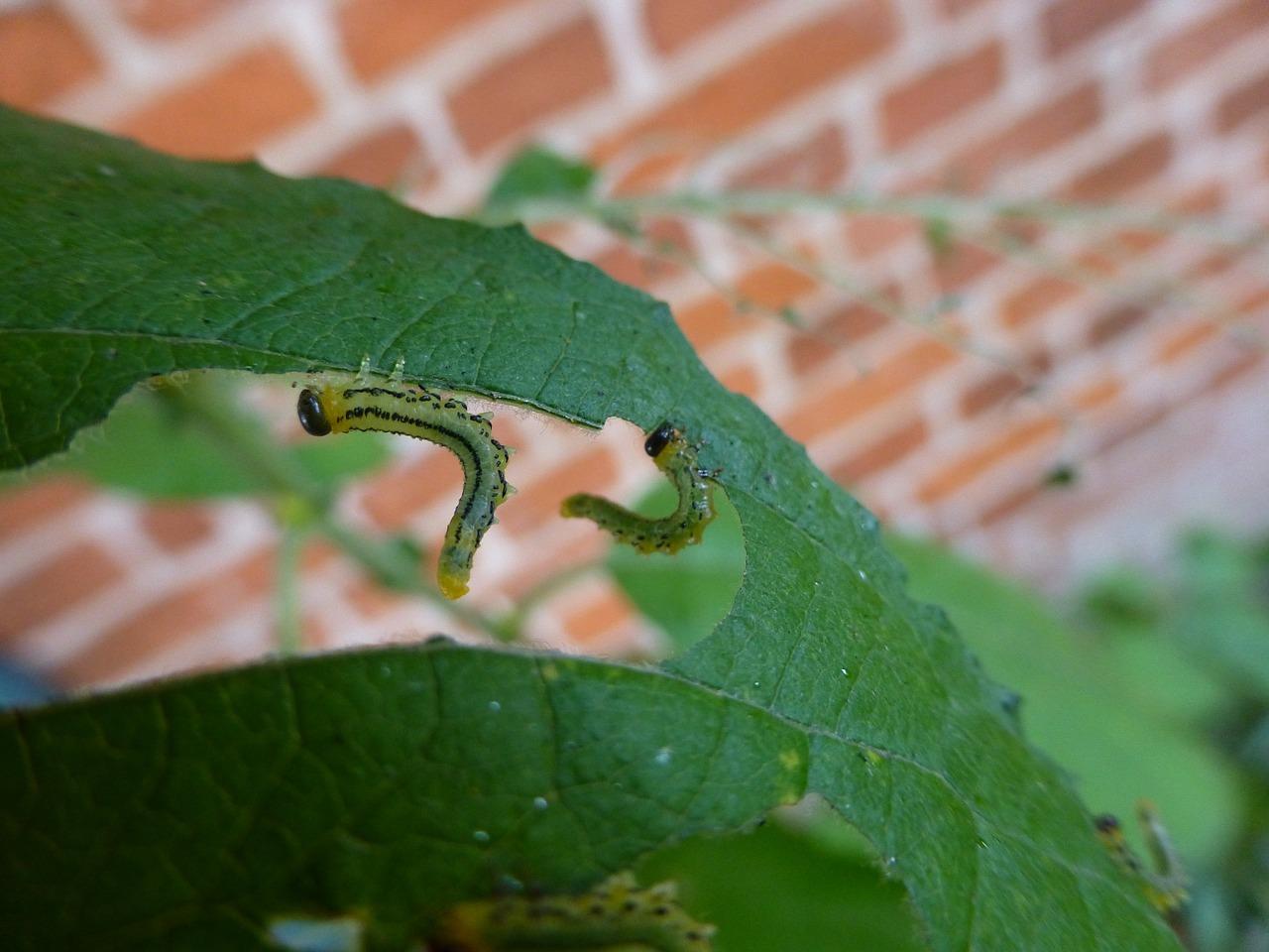 holed leaf.jpg