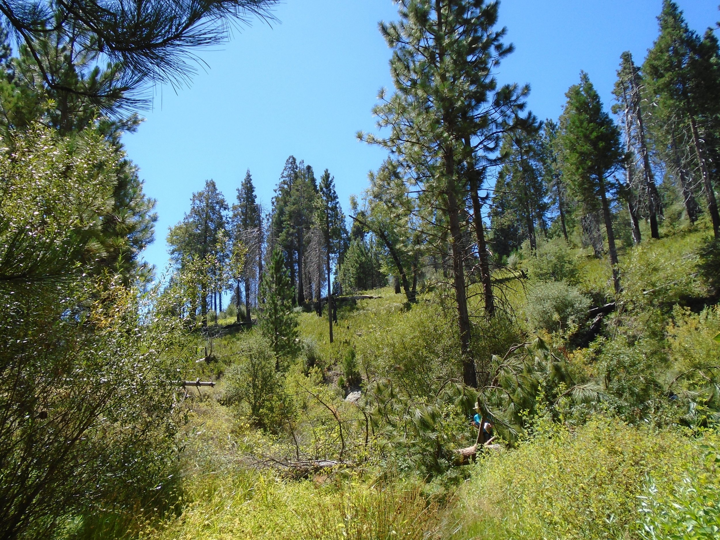 Palomar Mtn.jpg
