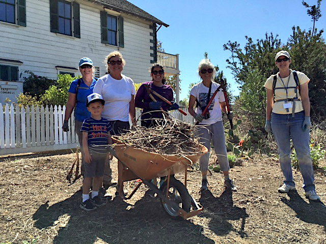 """Park Champions and Park Staff Help with Preparing the Old Town Native Plant Landscape for Changes - Six Park Champions volunteered alongside Old Town State Park staffers Chad, Susan, and Matt, to rebuild and paint another section of the old wood picket fence around the historic McCoy House, while four other Champions helped CNPS member Kay Stewart remove overgrown black sage from the Native Landscape. The purpose of the landscape is to """"re-create a usable, edible landscape-like the one used by the Native Americans who lived here before Europeans arrived."""" The work was started in 2006 and at the time the species selection seemed fine. Sadly, large shrubs provided hiding places for people, so the landscape is being """"remodeled"""" to eliminate them.After some irrigation repairs are completed by Park staff, on November 17, at the next Park Champions volunteer work party, CNPS members Kay Stewart and Peter St. Clair will show volunteers how to sow wildflower seeds. Seeds of locally common species of annuals will be scattered in bare spots to result in short-term beautification. Kay and Peter are also planning to replant using plants that will not reach more than 2' in height and have ethnobotanical value. They hope that funding to replant the Landscape with an estimated 300 plants, at a cost of $2,000 to $3,000, will be found. If so, planting parties in December and/or January will be scheduled."""