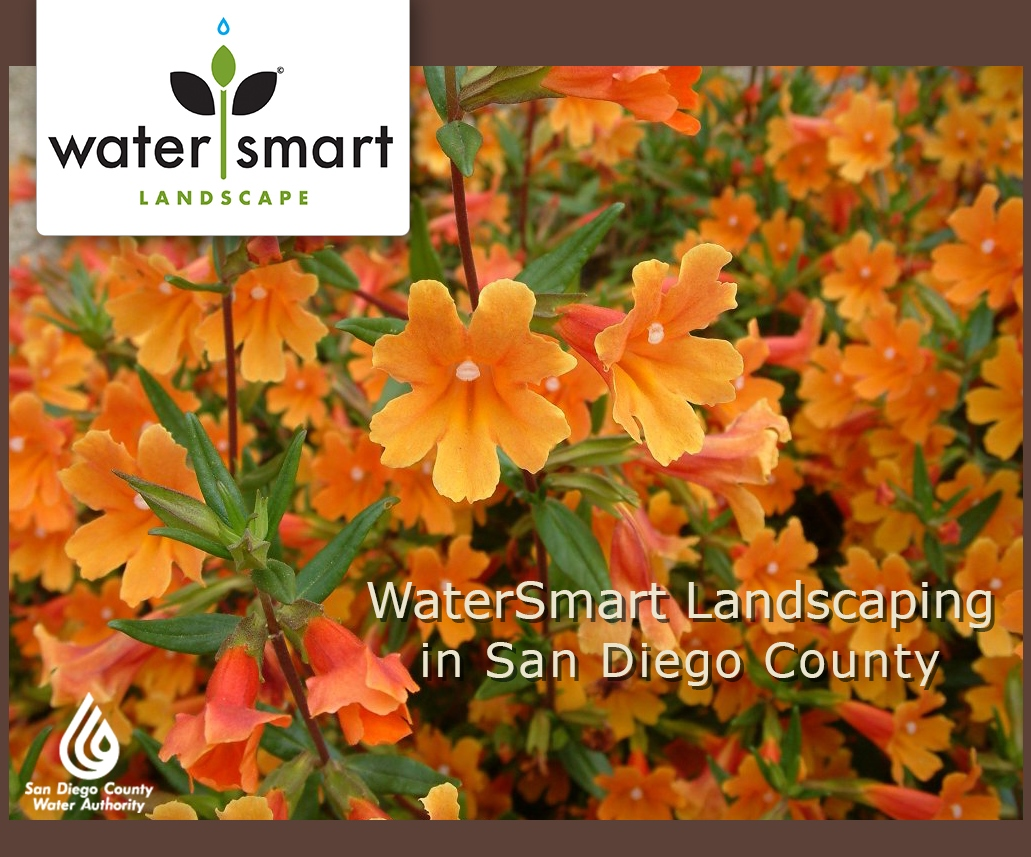 watersmart sd landscaping monkeyflower.jpg