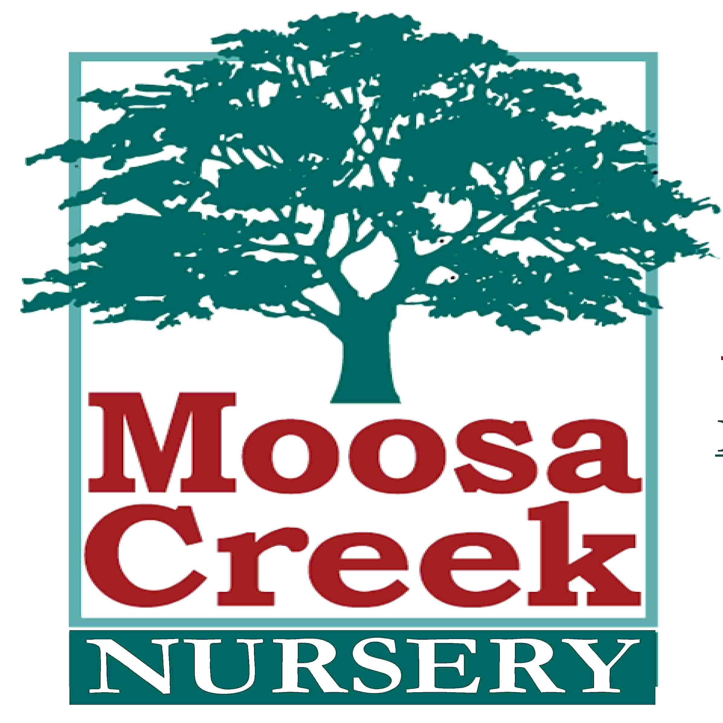Moosa Creek square.jpg