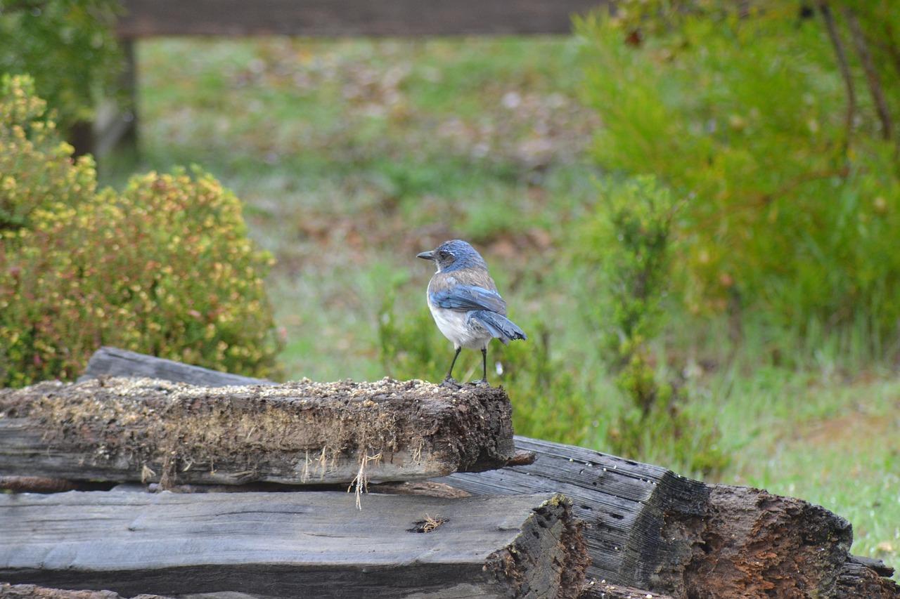 blue-jay-3553921_1280.jpg