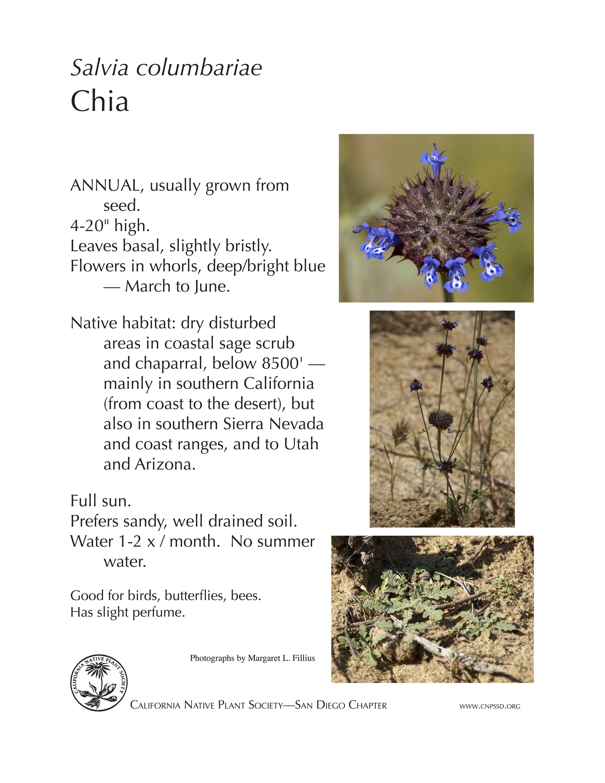 Plant Of The Month Chia Salvia Columbariae California Native