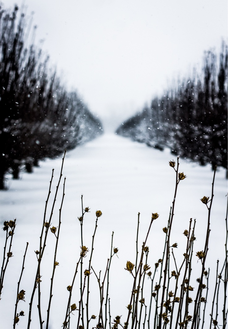 """""""White As Snow""""   2015"""