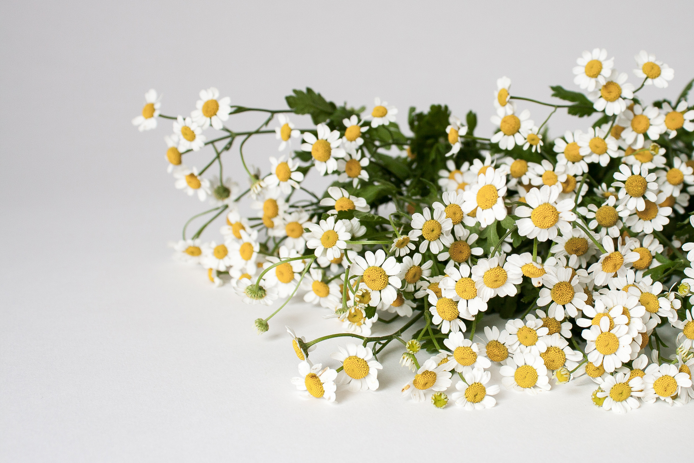 """Chamomile Ode to Lifestyle Change: Busy perfectionist """"woman bosses""""may need to slow down, self-care, self-work, and journal to find true acceptance, contentment and peace."""