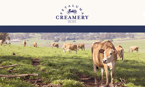 PETALUMA CREAMERY / SPRINGHILL CHEESE    Pasture-Raised Raw & Pasteurized Jersey Cow Cheese, Butter & Ghee