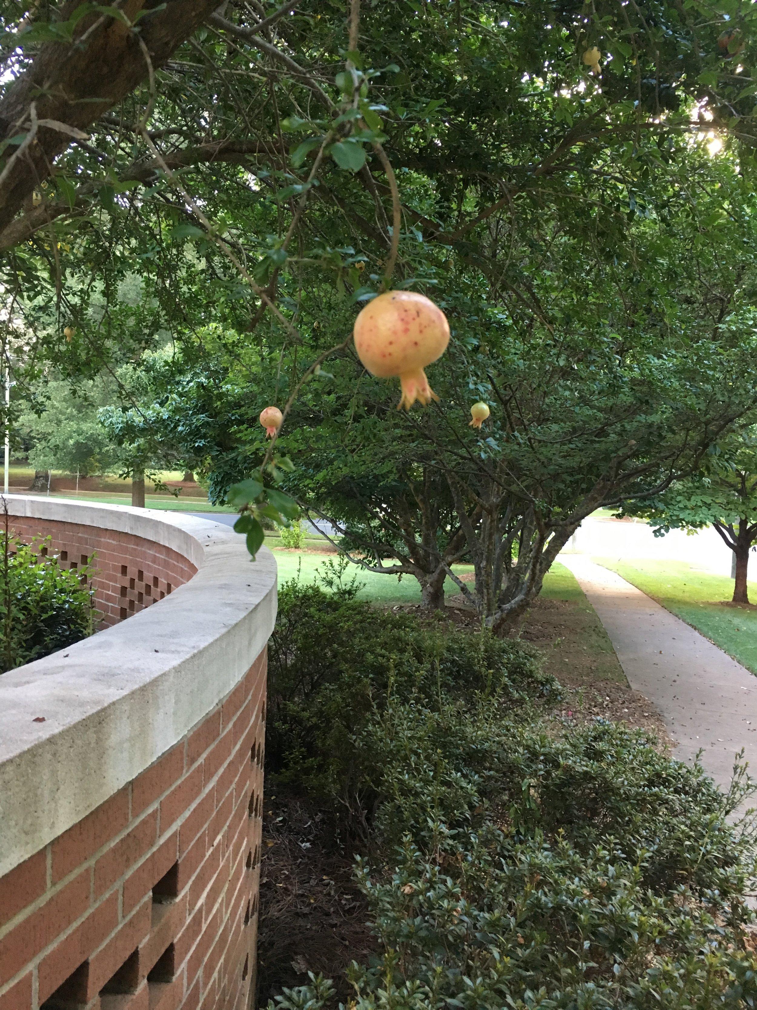Low Hanging Fruit Picture.jpg