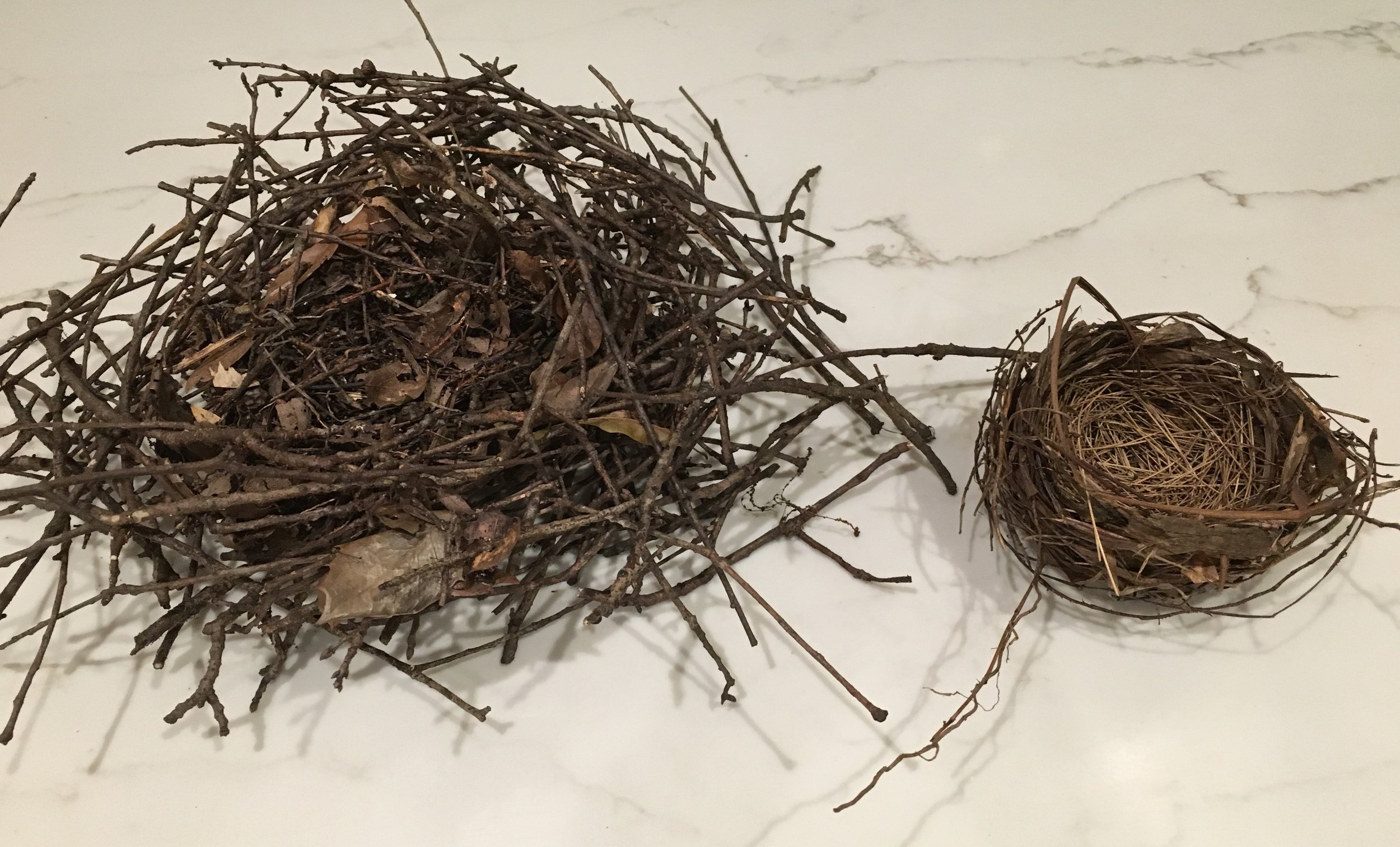 two nests for blog.jpg