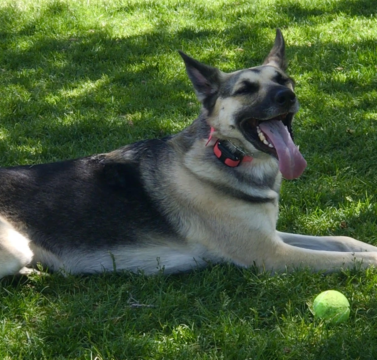 dog obedience training orem grass summer