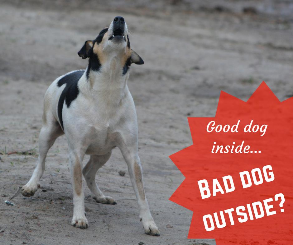 dog training behavior obedience utah county good bad