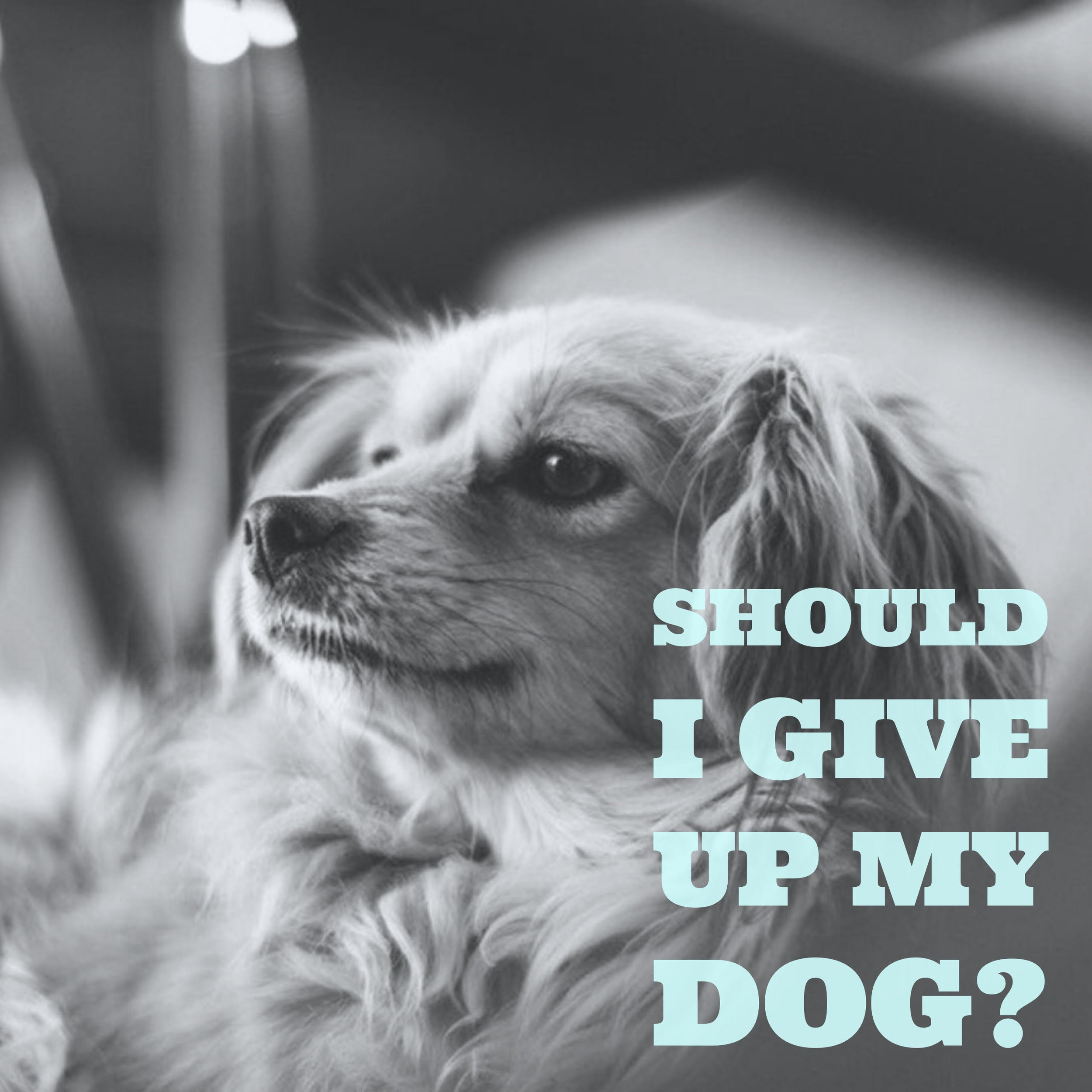 Should I Give Up My Dog? — Dog Training and Puppy Training