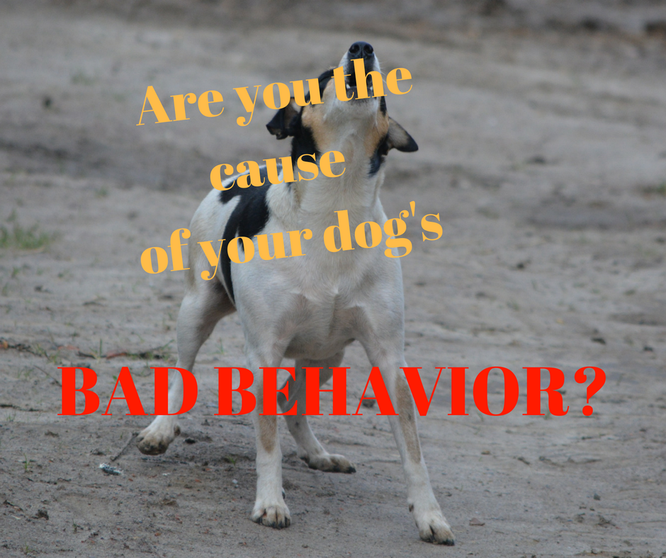 Are you the cause of your dog's.png