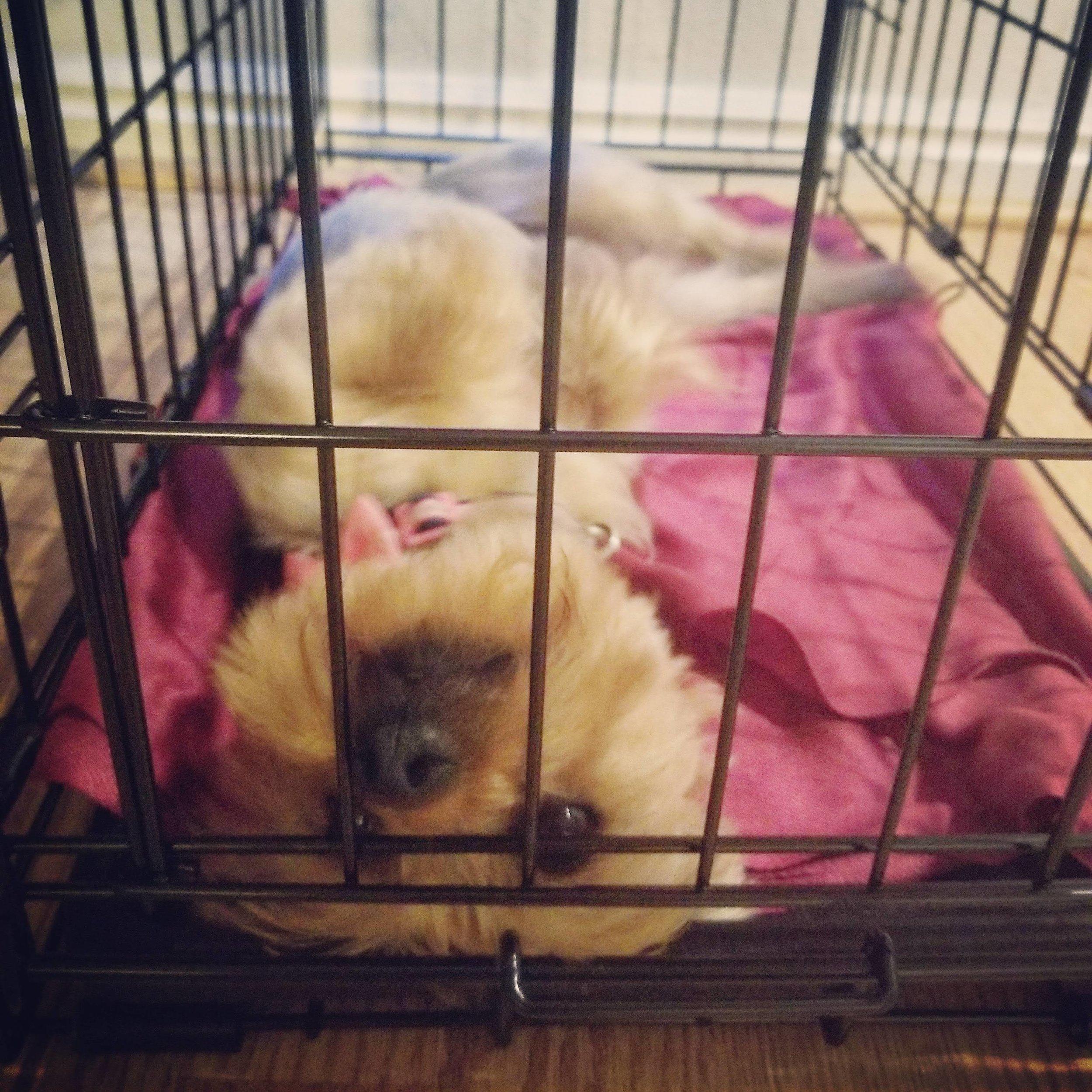 dog training obedience utah county orem trainer