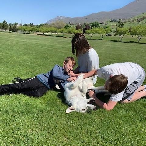 dog training near me utah county orem puppy training