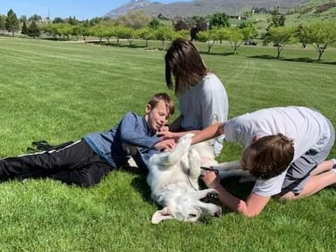 dog training utah county orem trainer