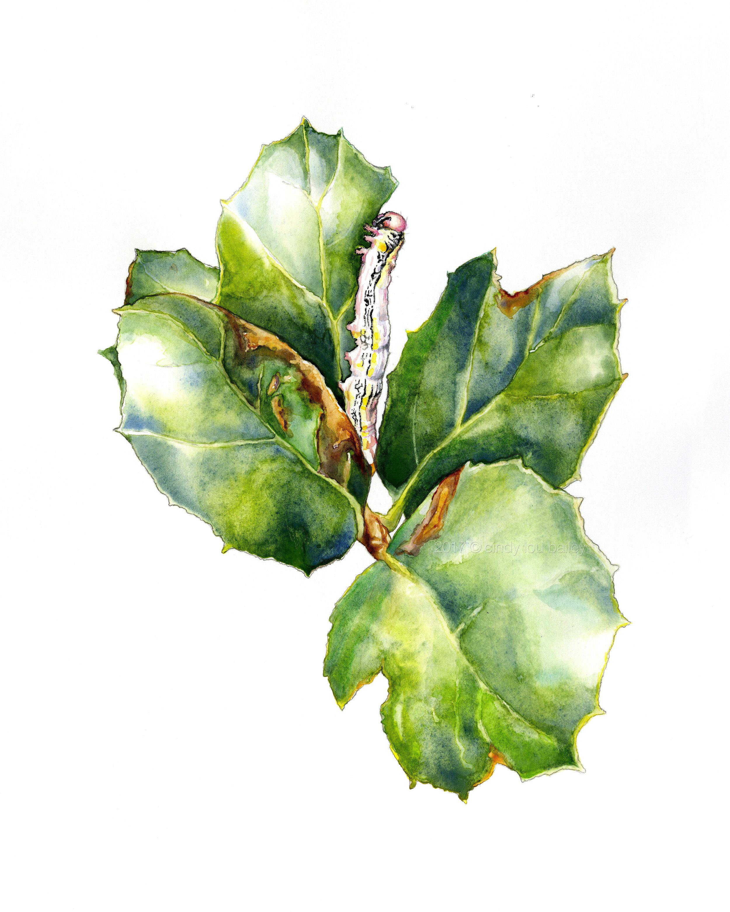 California Oak Moth Caterpillar