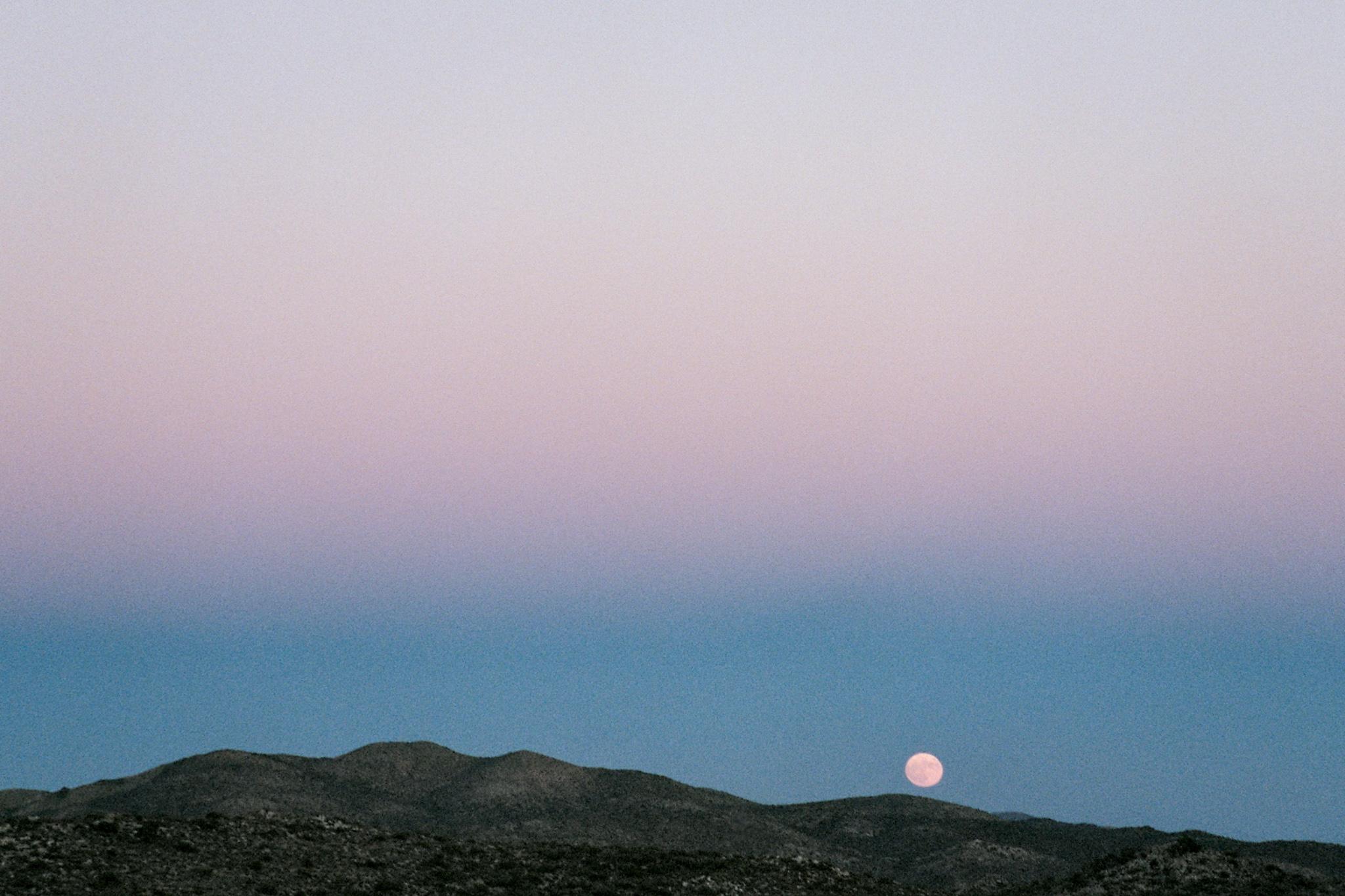 Joshua Tree National Park, 2016 #travel #35mm #film