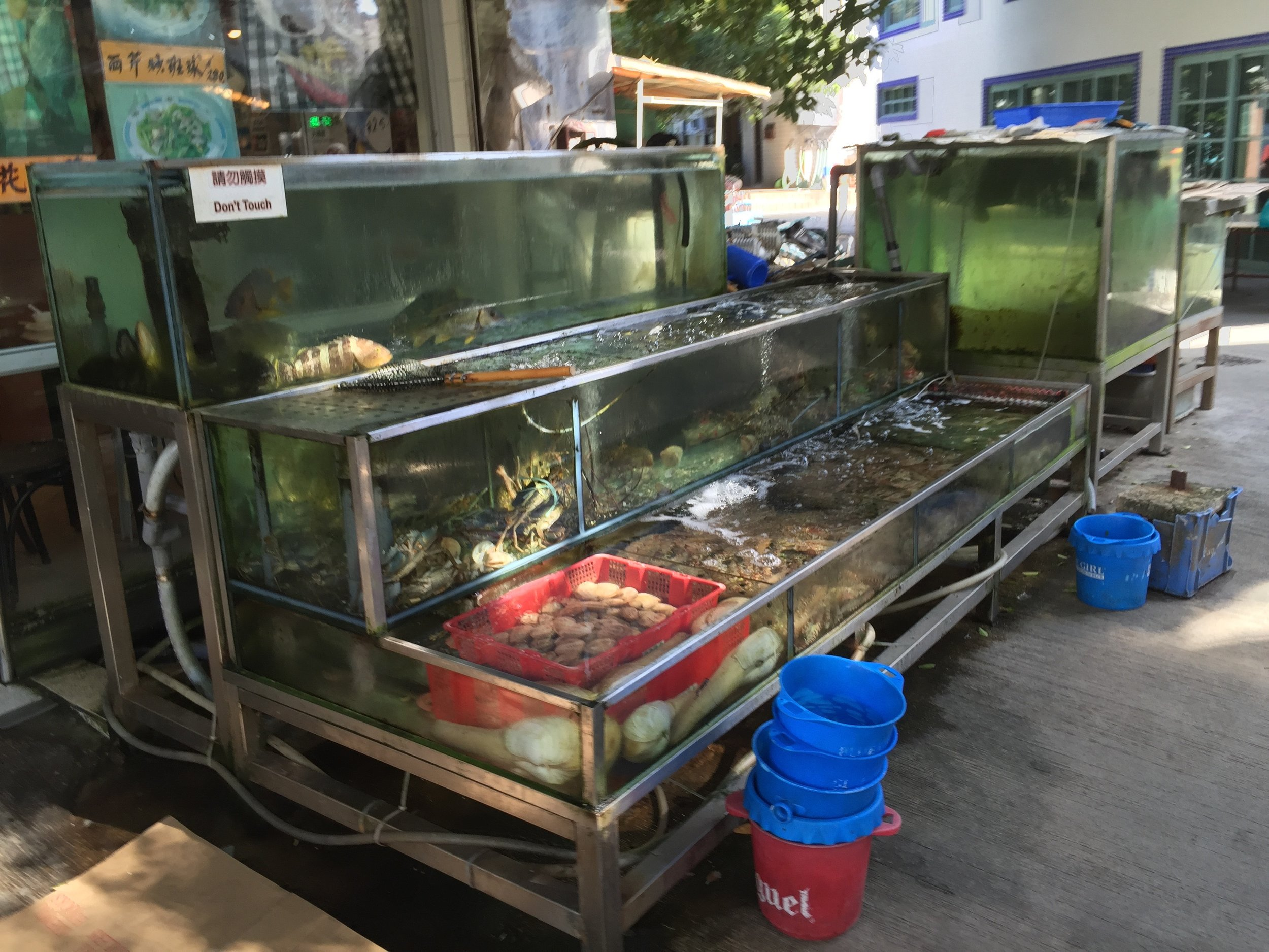 Live seafood at a Lamma Island restaurant