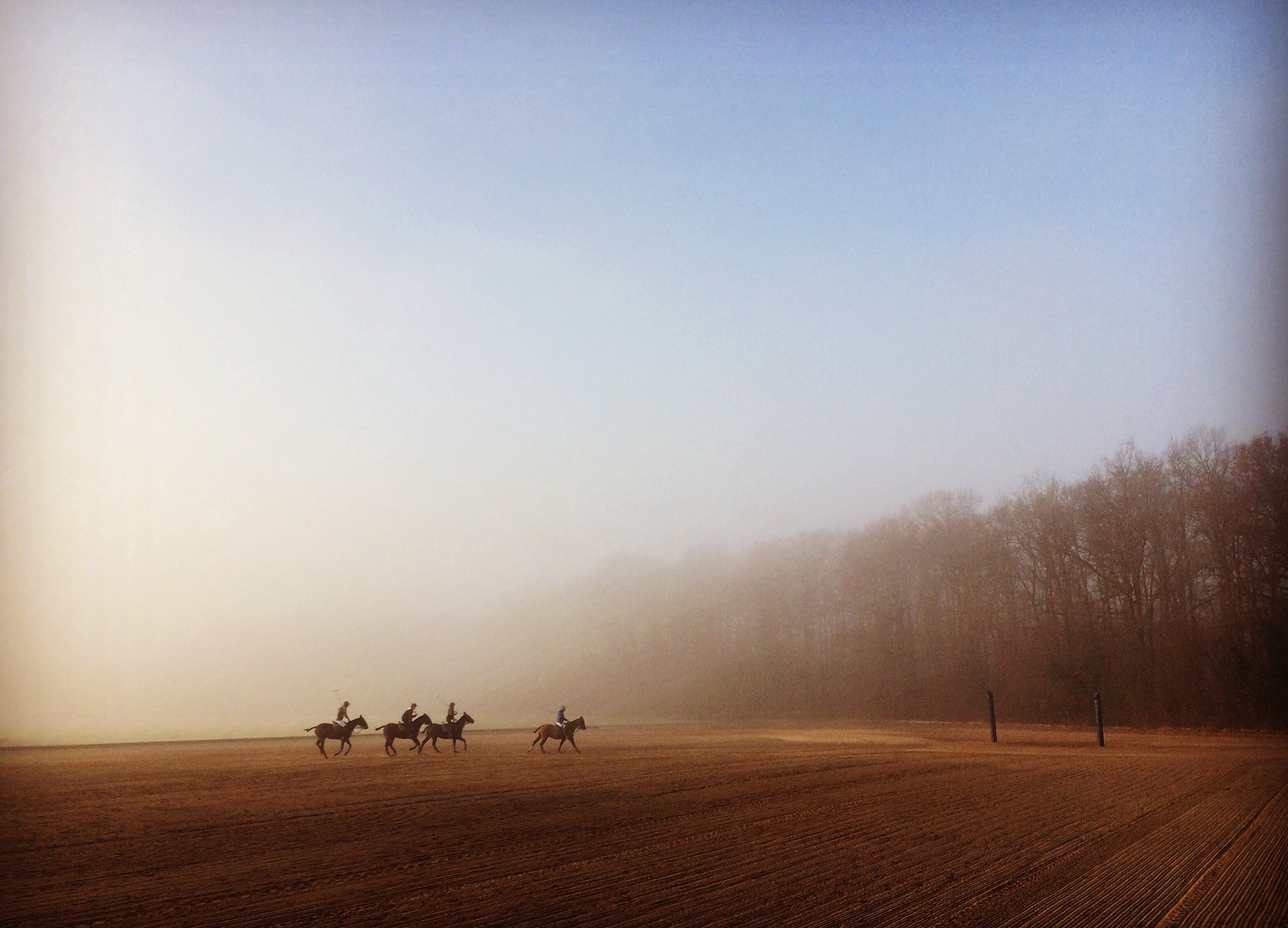 Entrainement matinal sur le terrain en sable du Polo Club du Domaine de Chantilly  Early training on the sand field of Chantilly Polo Club