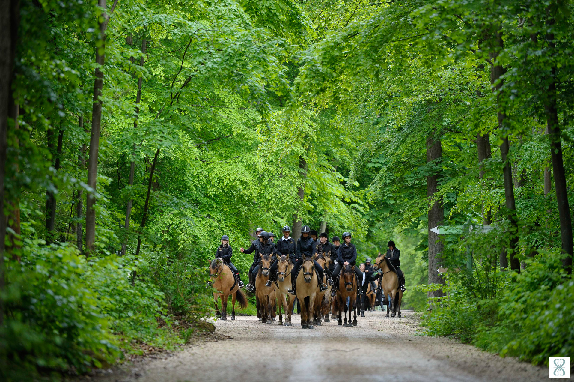 Sémianire d'entreprise et loisir : Découverte de la forêt de Chantilly, sur les allées cavalières