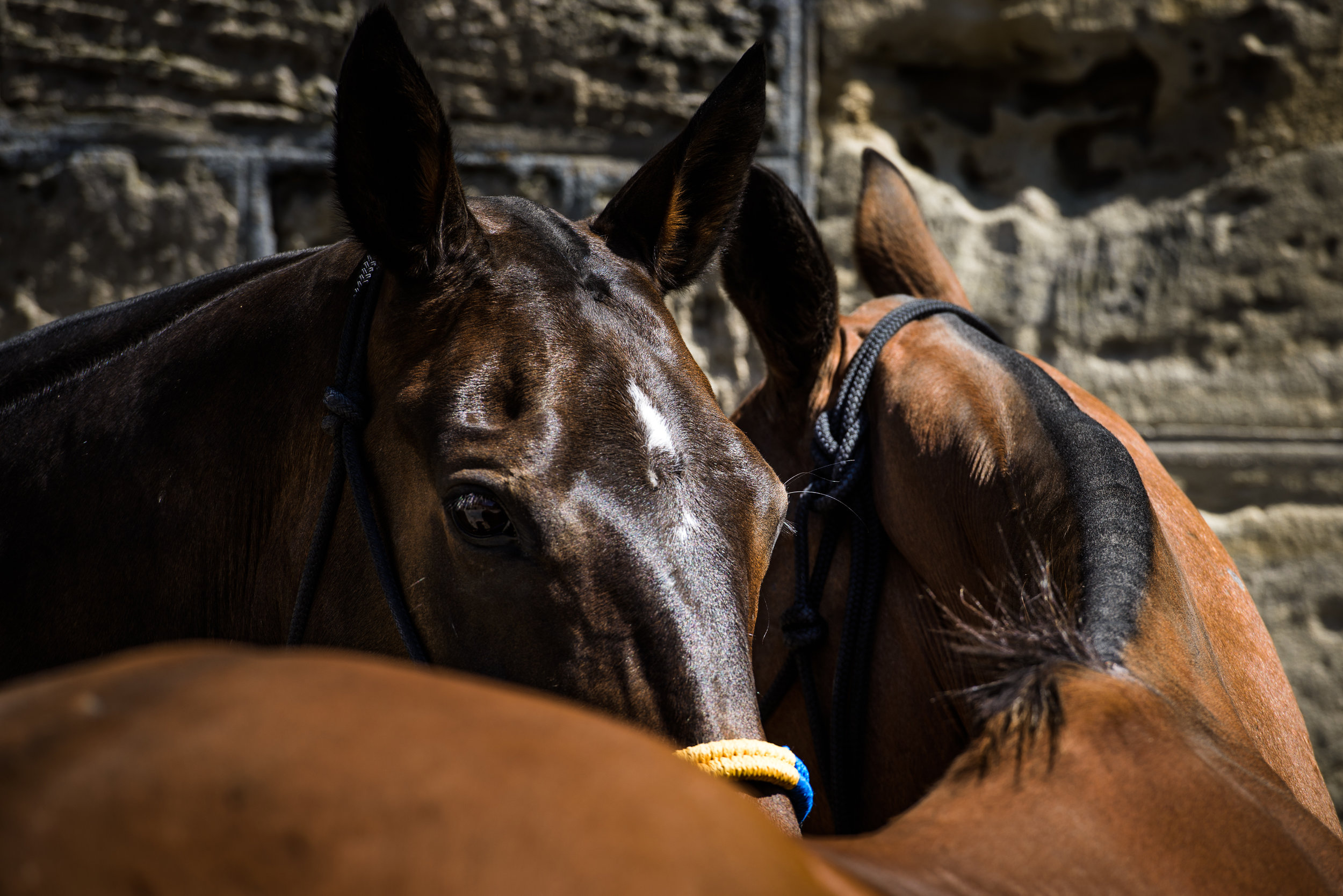 HORSE-2018.JPG
