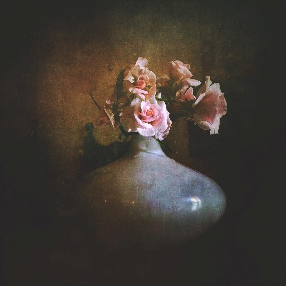 Bouquet of roses Cecile Brunner