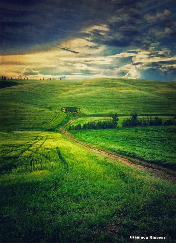 Landscape 879 Val d'Orcia Hills