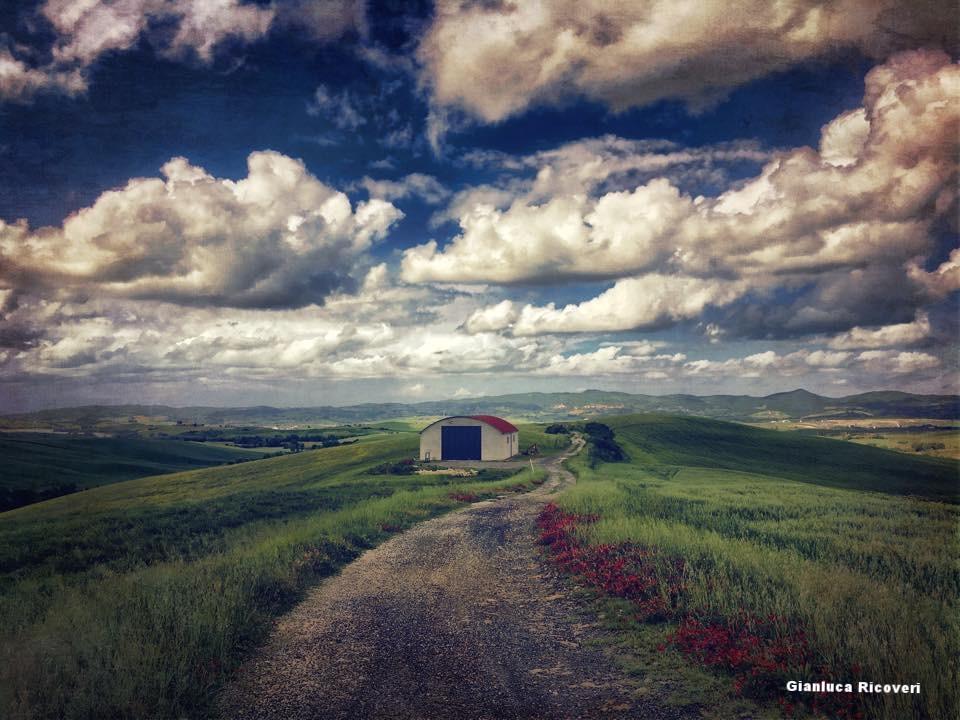 Landscape 1094 Landscape with barn and alfa alfa