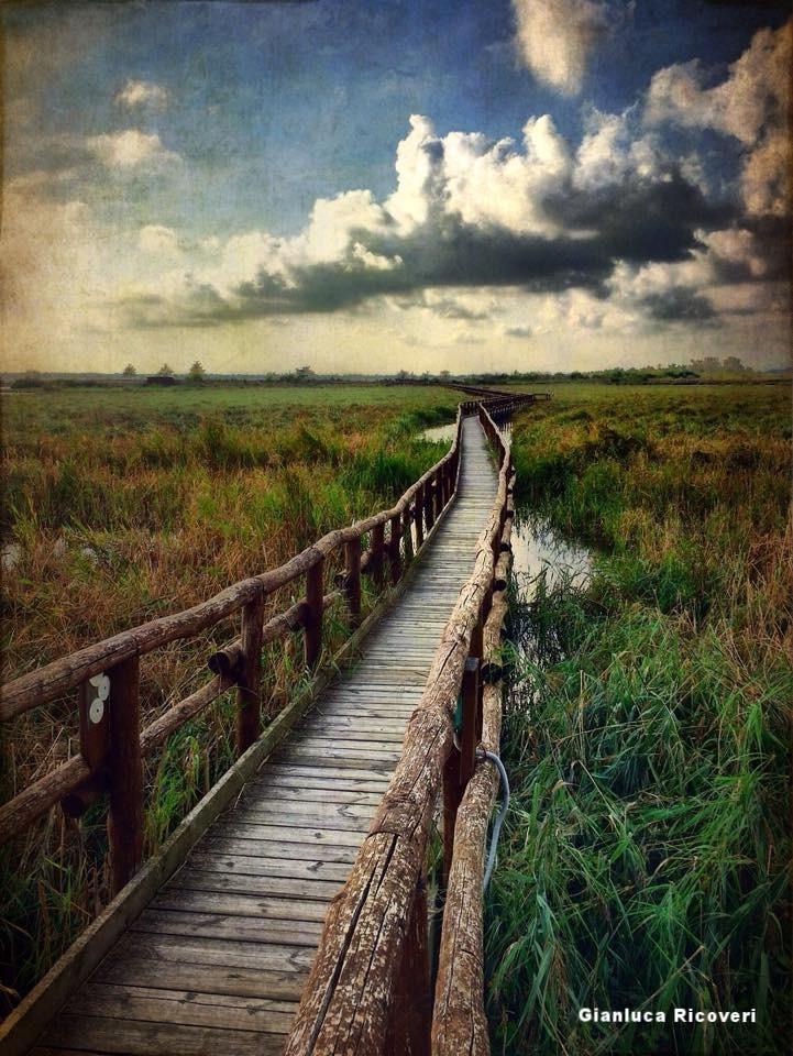 Landscape 649 Walk Path