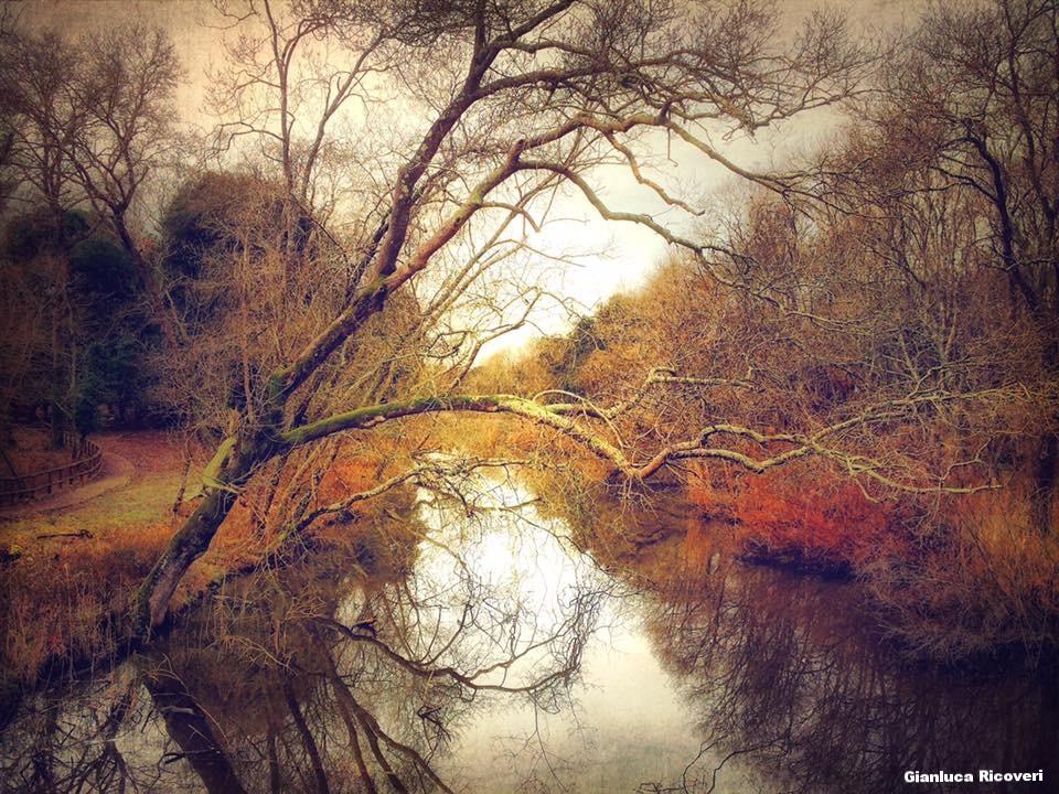 Landscape 1228 The dead tree