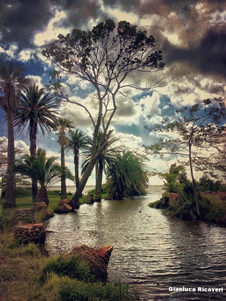Landscape 1116 Palms trees