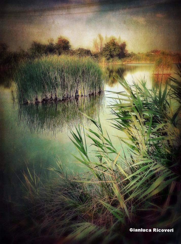 Landscape 892 Reeds