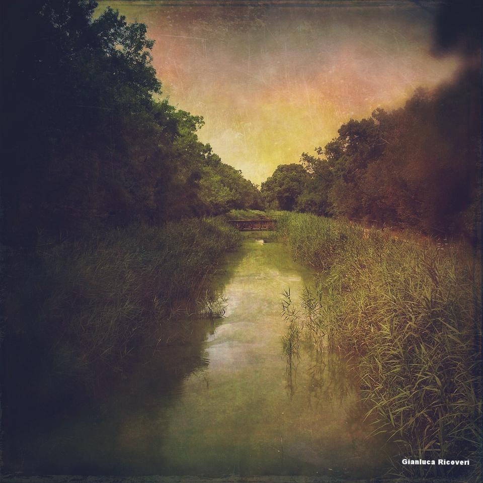 Landscape 591 The canale near San Rossore