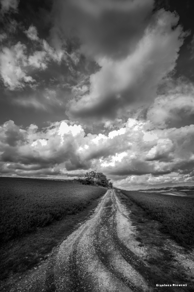 Tuscany's hills in B&W # 30