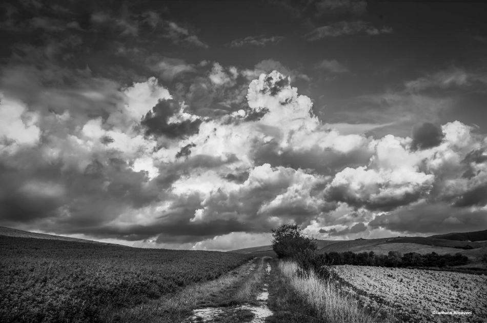 Tuscany's hills in B&W # 32